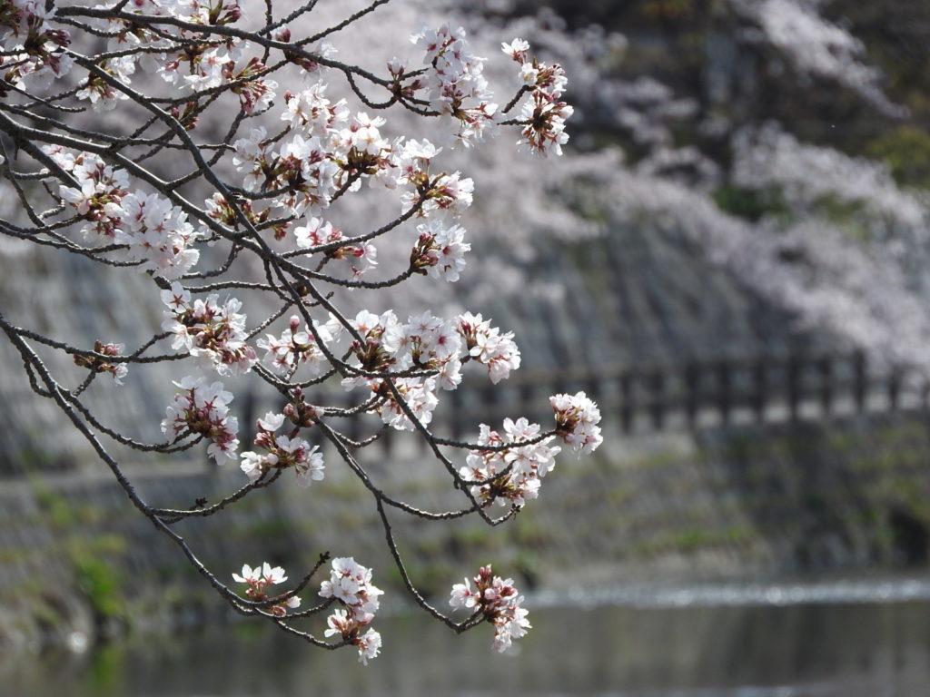 愛知県春日井市に20年住んで感じる、住みやすさ・住みにくさ