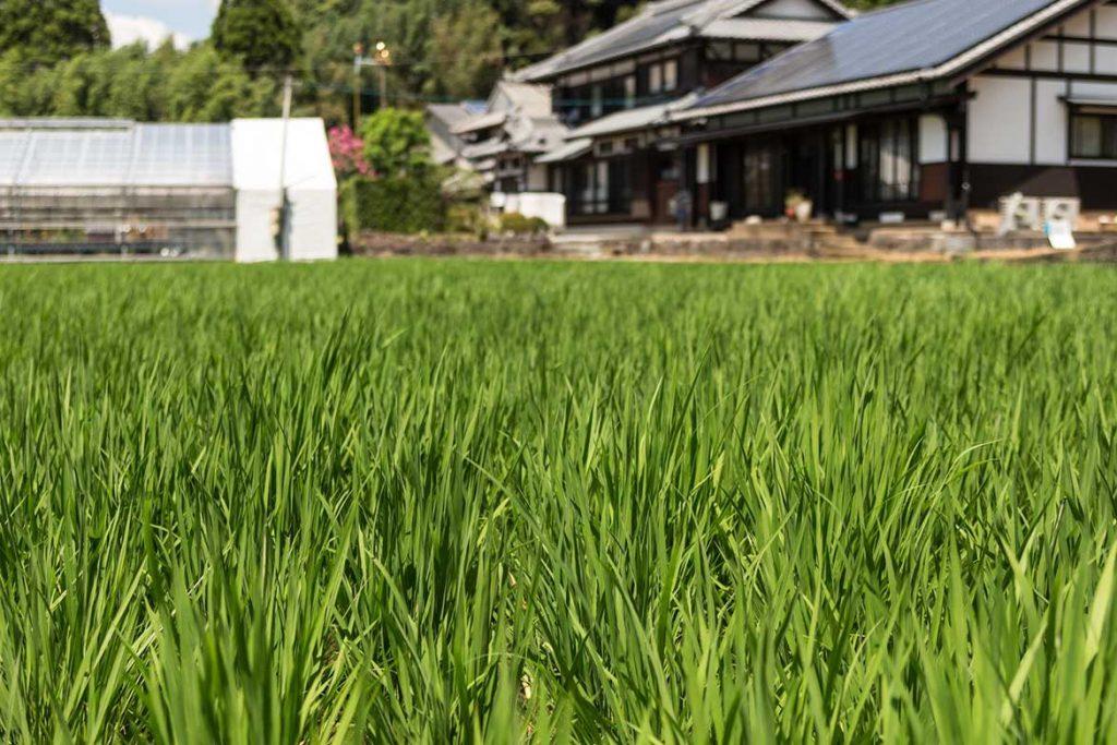 お米イメージ